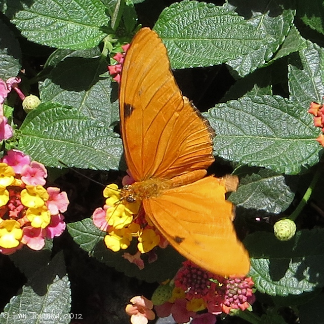 Northwestjourneycom butterflies and moths for Phoenix butterfly garden